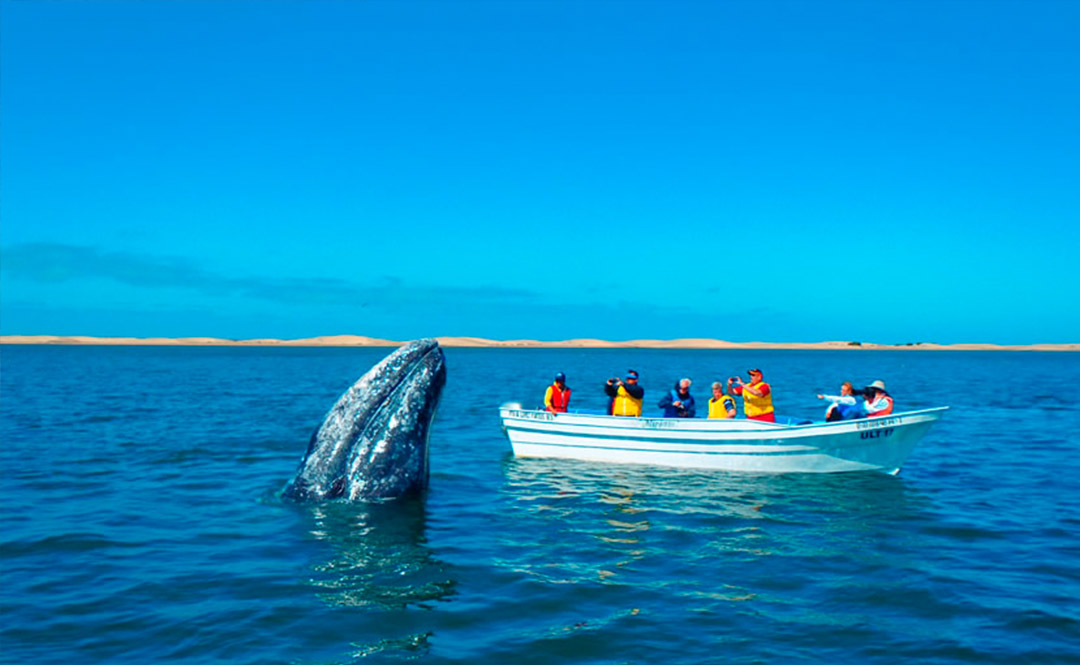 Tour destinations - Witness the Gray Whale Migration